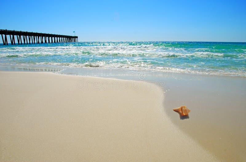Seashell por Cais fotografia de stock