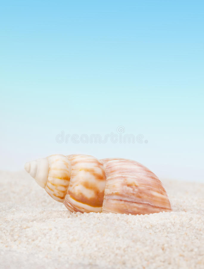Seashell puro no Sandy Beach foto de stock