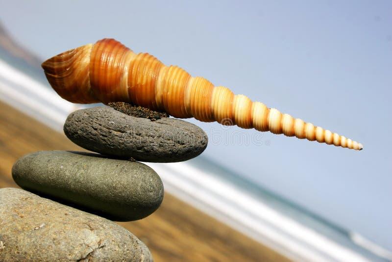 Seashell que aponta a maneira imagem de stock royalty free