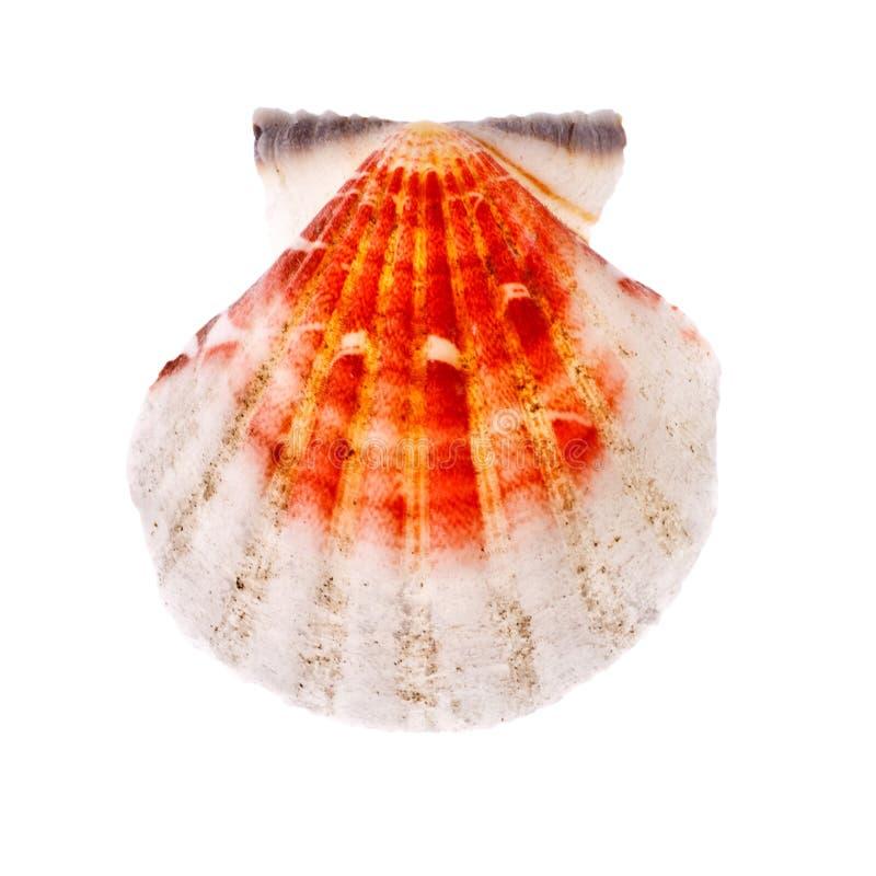 Seashell radial foto de archivo libre de regalías