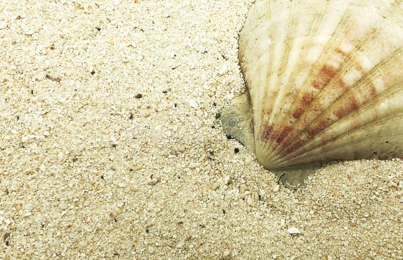 Seashell rozgwiazdy skorupy shellfish lata sezonu zbliżenie fotografia stock
