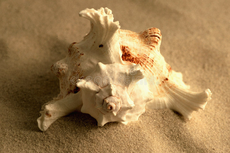 Seashell in Sand stock images