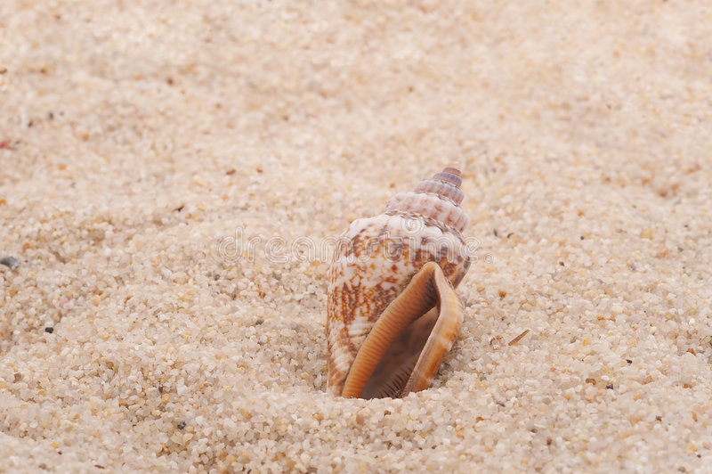 Download Seashell on the sand stock image. Image of nobody, tourist - 8454819