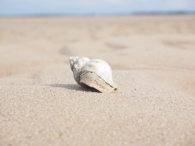 Seashell, Sand, Ecoregion, Body Jewelry Free Public Domain Cc0 Image