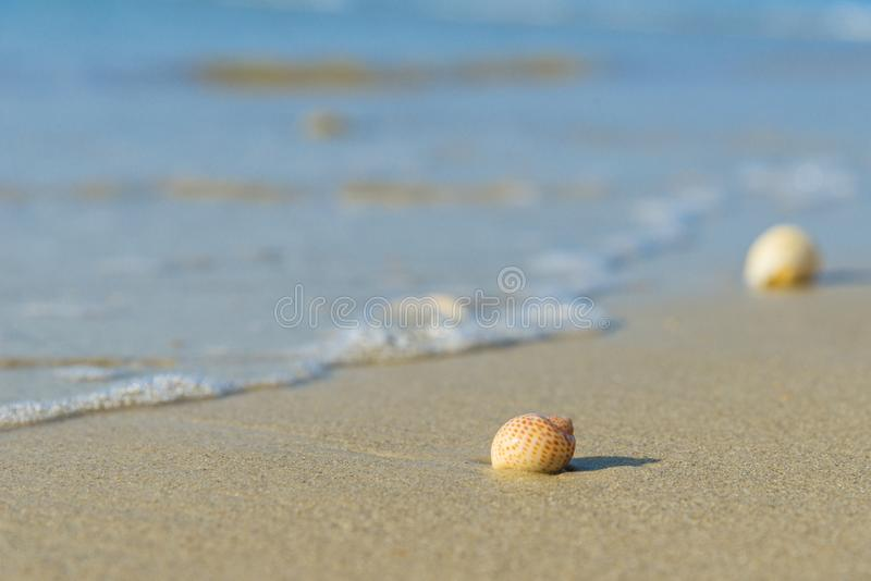 Seashell on sandy beach. Sea shell on sandy beach royalty free stock photos