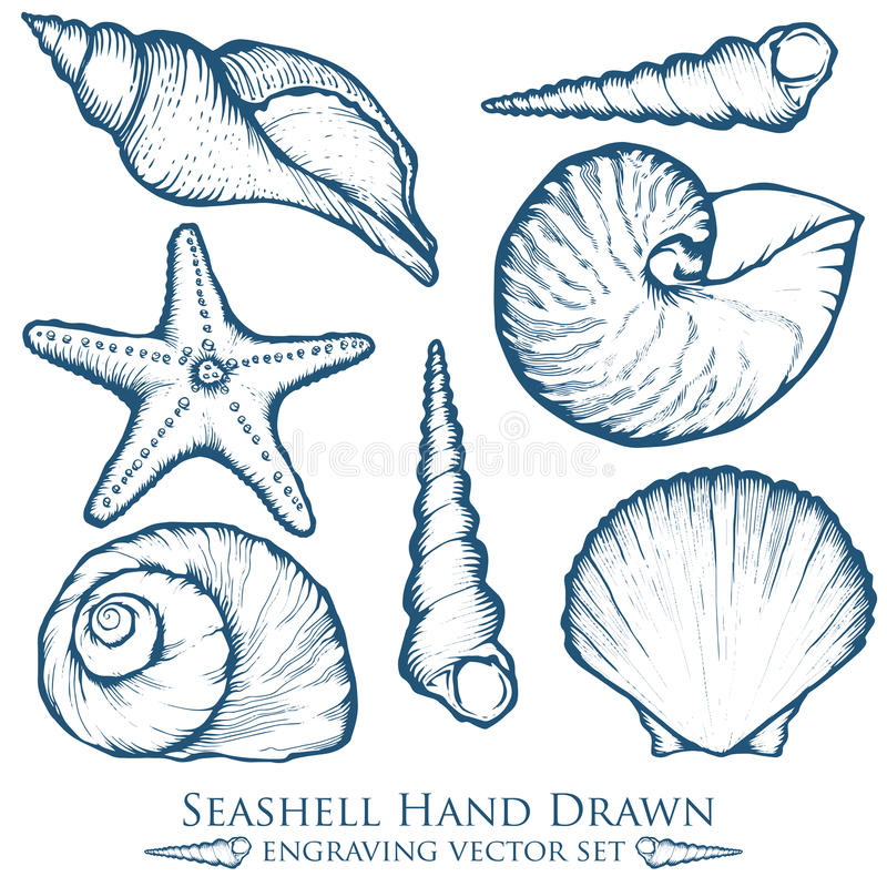 Seashell, sea shell, starfish nature ocean aquatic underwater vector set. Hand drawn marine engraving illustration on white backgr. Hand drawn marine engraving vector illustration