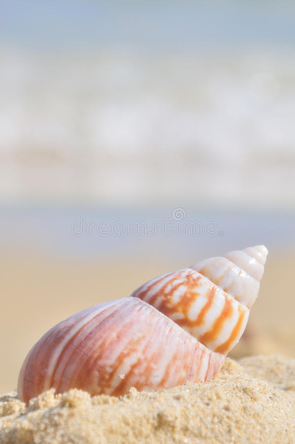 Download Seashell on the sea shore stock photo. Image of island - 39502300