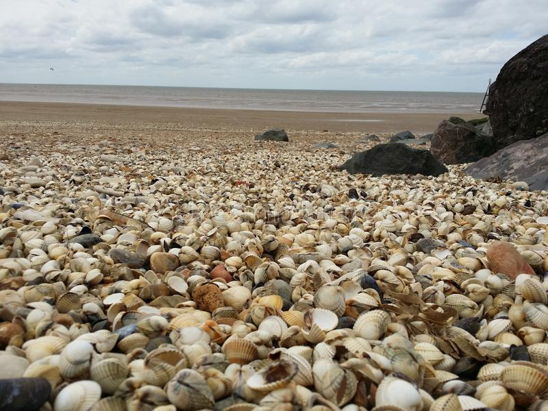 Seashell, Shore, Pebble, Sea royalty free stock photography