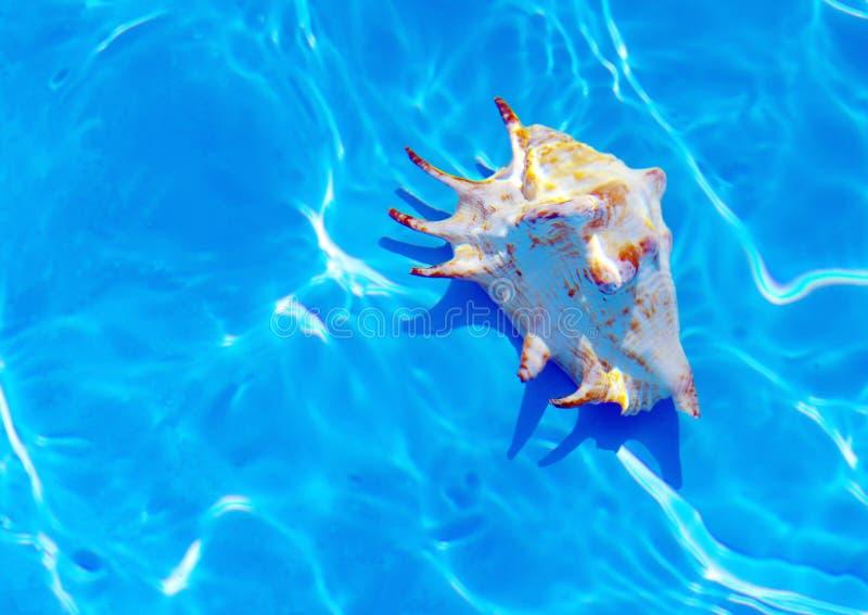Seashell sotto acqua. fotografia stock libera da diritti