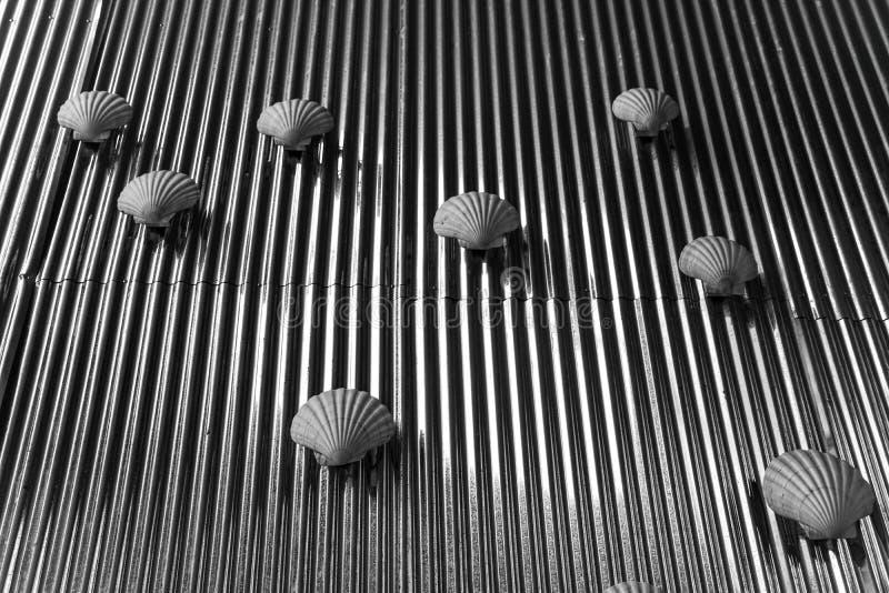 Seashell strip stock image