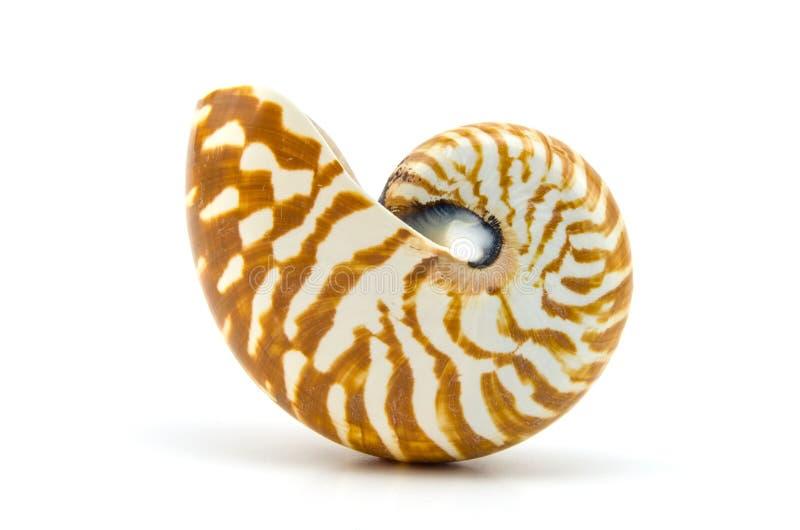 Seashell su priorità bassa bianca fotografie stock