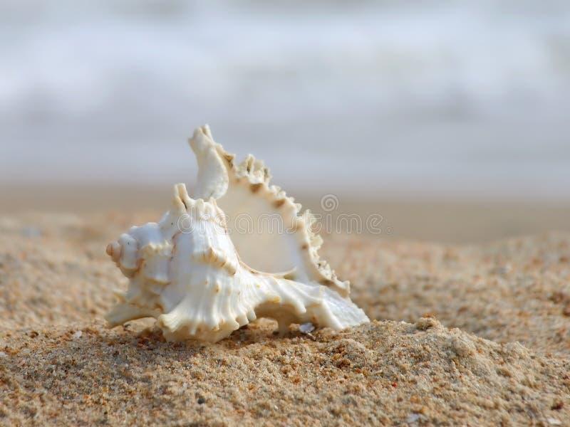 Seashell su una sabbia. fotografie stock
