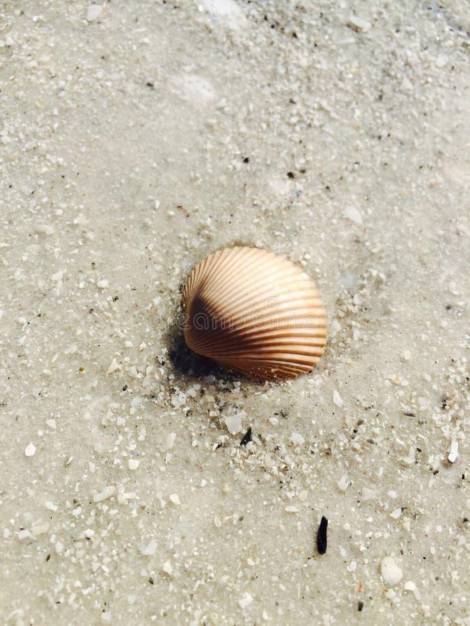 Seashell subacqueo fotografie stock