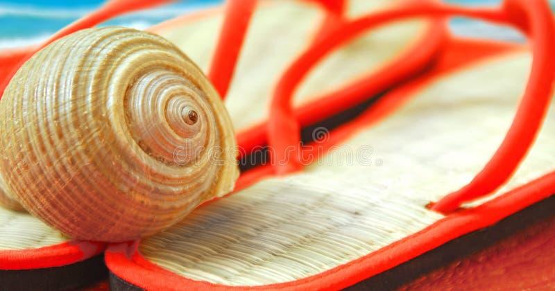 Seashell sur des santals à la plage photos libres de droits