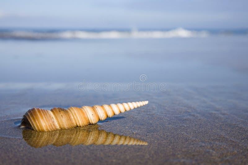 Seashell sur la plage photographie stock libre de droits