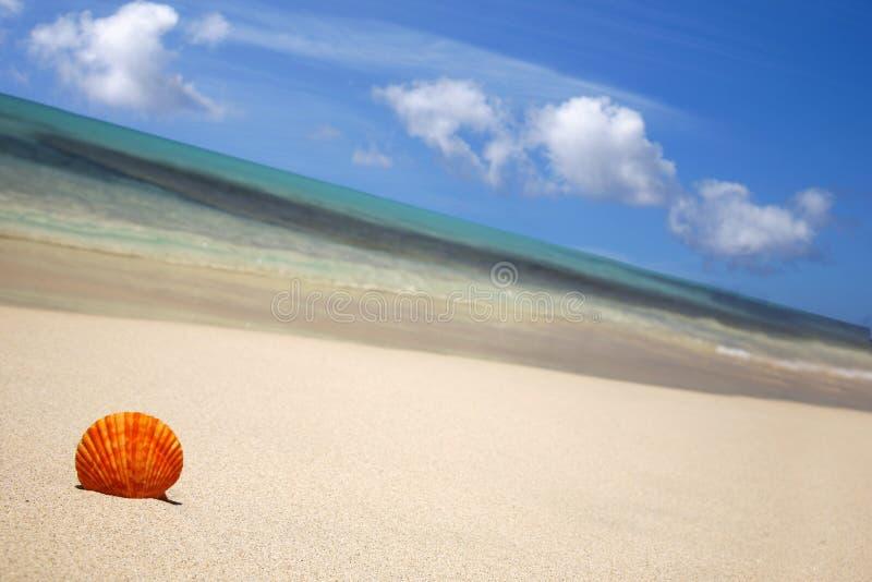 Seashell sur la plage photographie stock