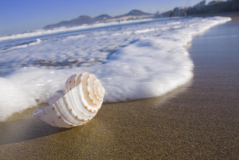 Seashell sur la plage de Canteras image stock
