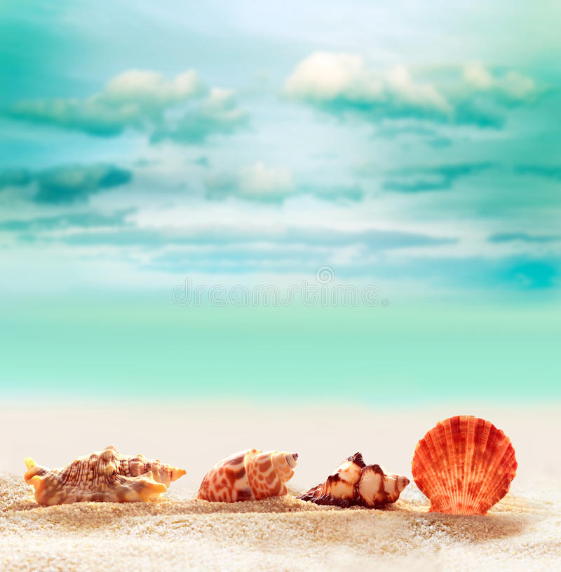 Seashell sur la plage sablonneuse image libre de droits