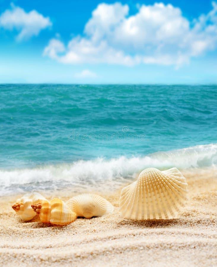 Seashell sur la plage sablonneuse photos stock