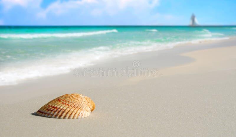 Seashell sur la plage tropicale photographie stock
