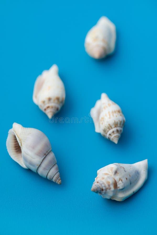 Seashell sur le bleu images libres de droits