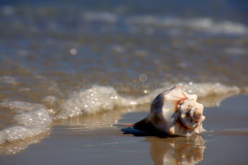 Seashell sur le bord de la mer photographie stock