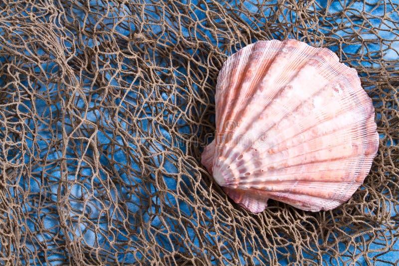 Seashell sur le filet de pêche photo libre de droits