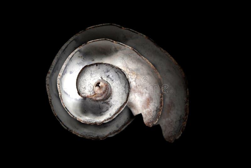 Seashell sur le noir photos libres de droits