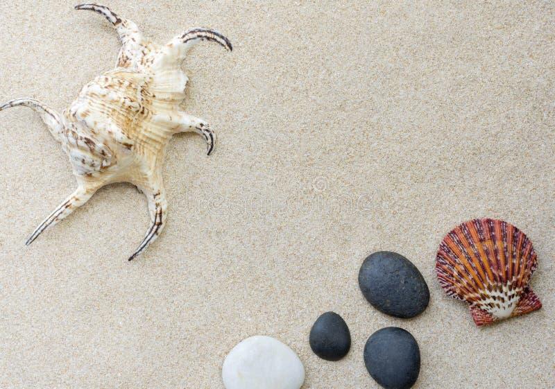 Seashell sur le sable image libre de droits