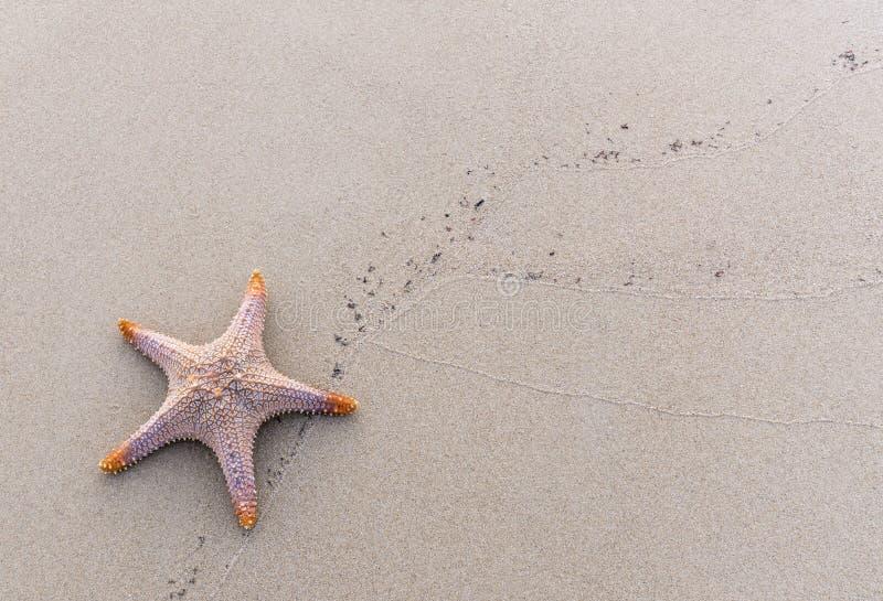 Seashell sur le sable images libres de droits
