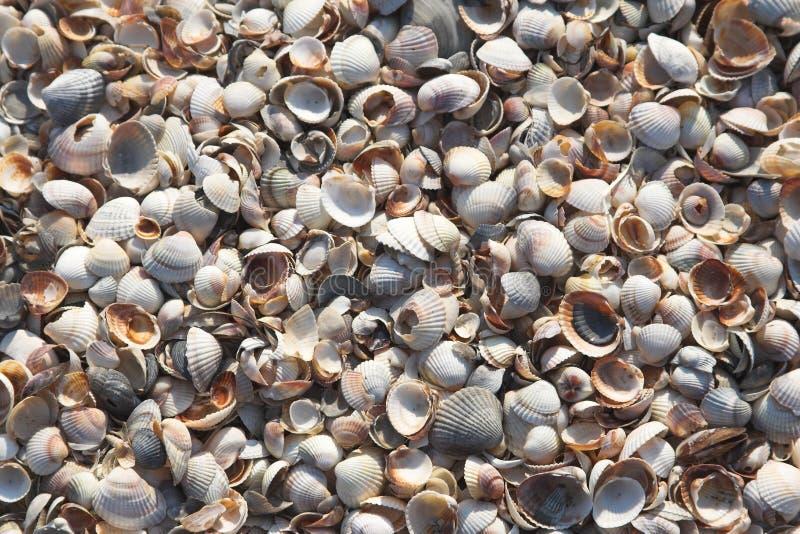 seashell tła obrazy royalty free