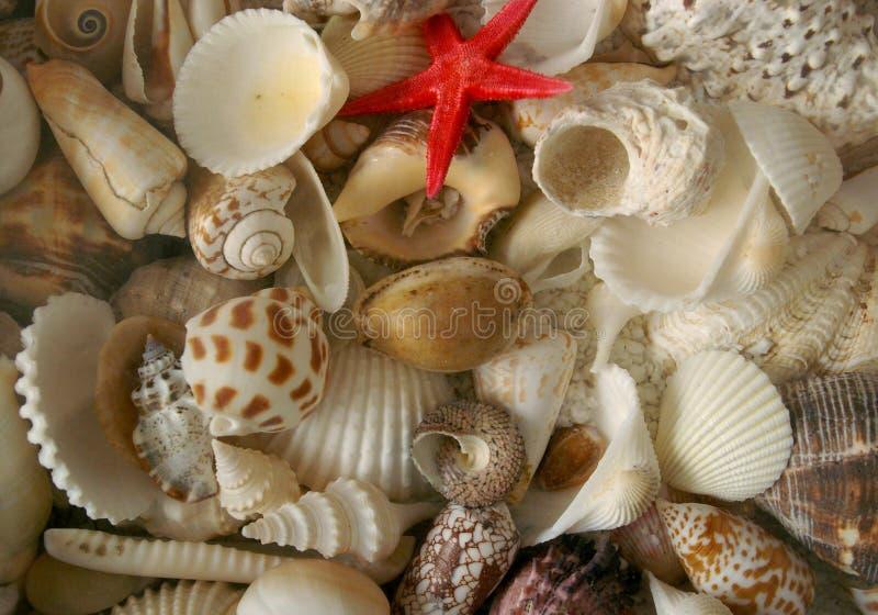 Seashell tekstury wzór obraz stock