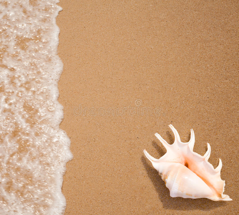 Seashell top view on sea surf edge royalty free stock photo
