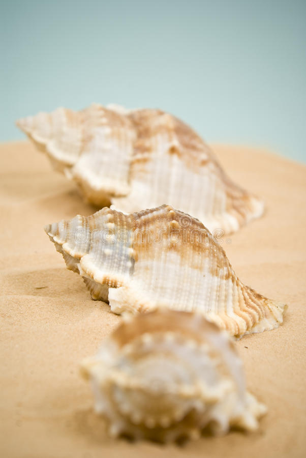 Seashell trois photos stock