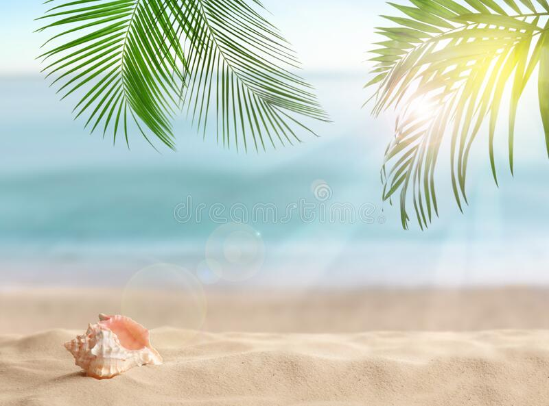 Seashell and tropical sandy beach on day. Seashell and tropical sandy beach on sunny day royalty free stock images