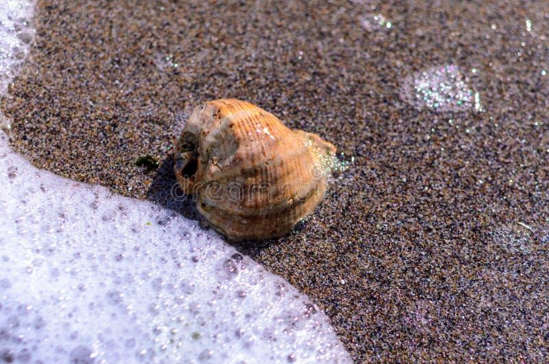 Seashell w piasku obraz stock