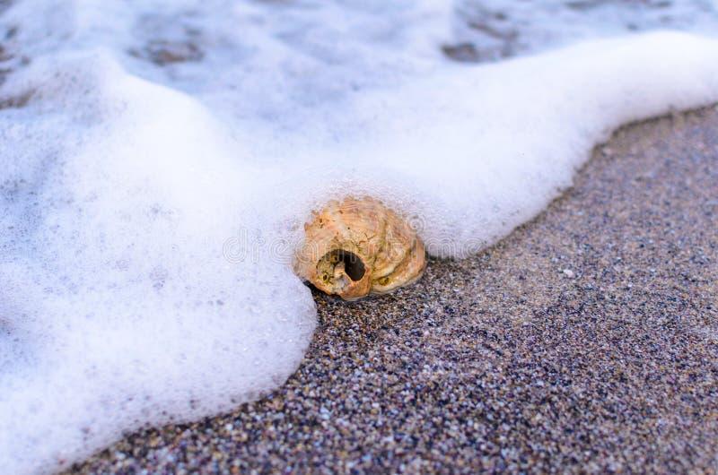 Seashell w piasku zdjęcie stock