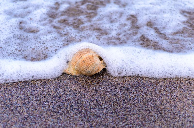 Seashell w piasku fotografia stock