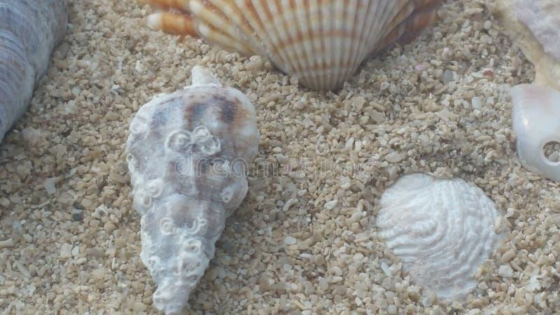 Seashell w Sicily zdjęcie stock