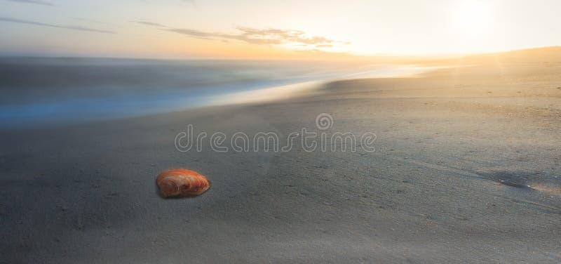 Seashell w zmierzchu obrazy royalty free