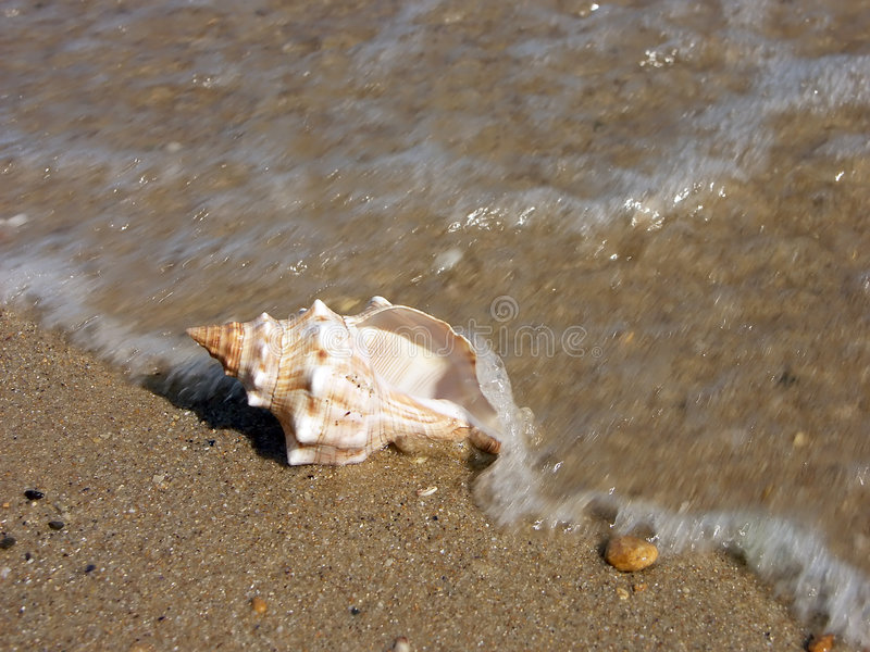 Seashell washed ashore
