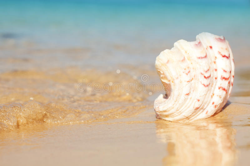 Download Seashell And Waves Stock Photo - Image: 25227620