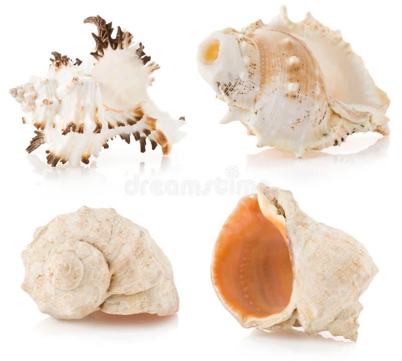 Seashell On White Royalty Free Stock Photography