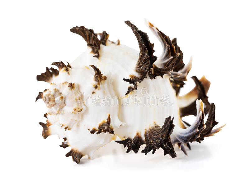 Seashell on a white background stock images
