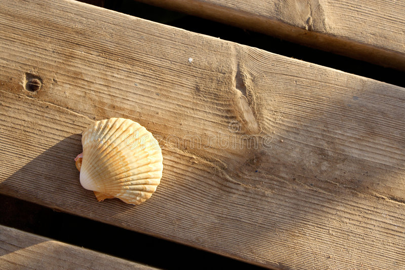 Download A Seashell On A Wooden Dock Stock Photo - Image: 8442336