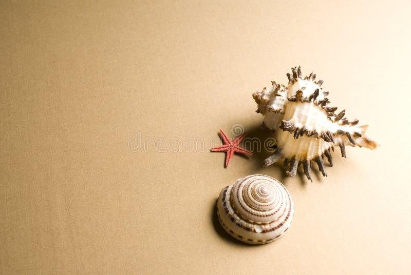 Seashell y estrellas de mar foto de archivo