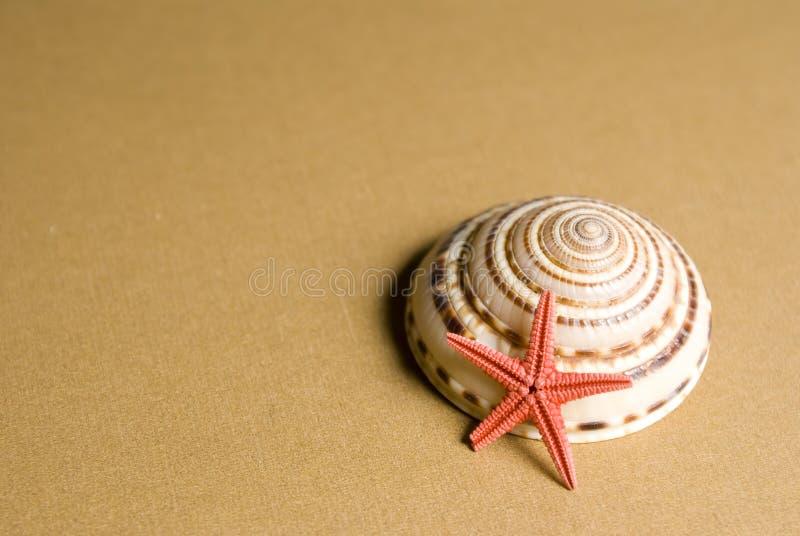 Seashell y estrellas de mar foto de archivo libre de regalías