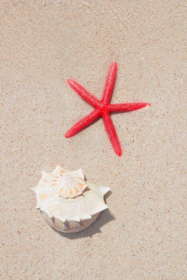 Seashell y estrellas de mar en la playa blanca de la arena imagenes de archivo