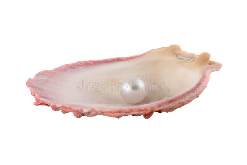 Seashell y perla foto de archivo libre de regalías