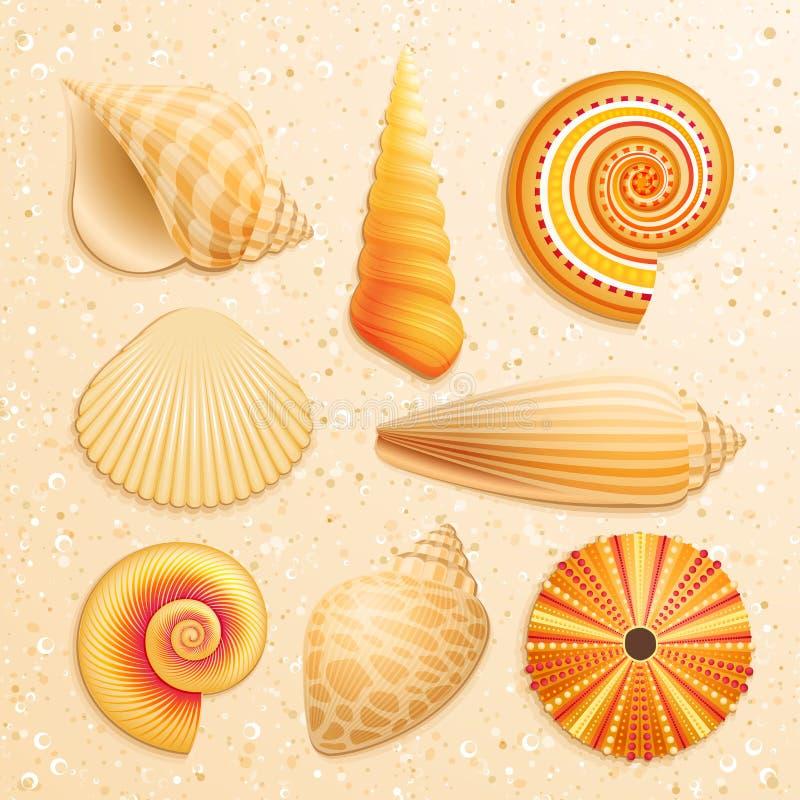 Seashellansammlung auf Sandhintergrund lizenzfreie abbildung
